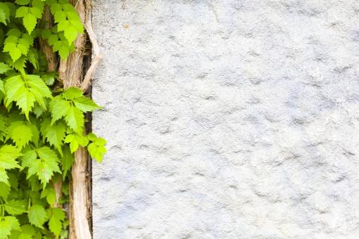壁 白い壁 白 緑 グリーン 植物 素材 カベ かべ テクスチャ インテリア エクステリア 建築 建築物 背景 背景素材 バック バックグラウン