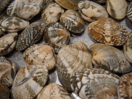 あさり アサリ 貝 砂抜き 下ごしらえ 潮干狩り 海 砂出し ご飯 浅利 魚介 魚介類 魚貝類 魚貝 貝殻 砂浜