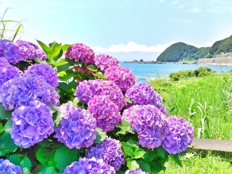 晴れ 晴天 快晴 青空 青い ブルー 空 そら スカイ スカイブルー 水色 みずいろ 雲 太陽 ひかり 陽射し 日光 輝き きらきら 海 うみ ビーチ 海辺 浜辺 暑い季節 初夏 梅雨 雨 うるおい 水 波 山 緑 みどり グリーン 葉 はっぱ 植物 花 フラワー 紫陽花 アジサイ あじさい パープル むらさき 紫 自然 風景 景色 田舎 癒し のどか ゆっくり さんぽ 風 潮風 リフレッシュ 日影 綺麗 きれい 美しい ビューティフル