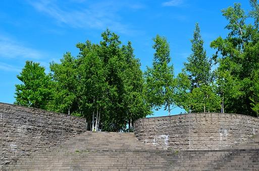 階段 石段 石 壁 自然 景色 風景 植物 樹木 森 森林 林 木 樹 空 新緑 葉 葉っぱ 大木 背景 森林浴 癒し リフレッシュ 緑 青空