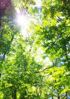 森 もり 森林 背景 バックグラウンド 空 太陽 日光 林 葉 枝 さわやか 爽やか 日差し 陽射し 日射し 木漏れ日 こもれび 木洩れ陽 紫外線 uv 光合成 二酸化炭素 環境 きれいな空気 登山 ハイキング 深呼吸 空気 緑 葉っぱ グリーン マイナスイオン 夏 初夏