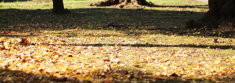 落ち葉の絨毯02の写真