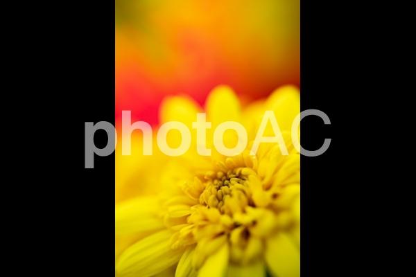 黄色い花の写真