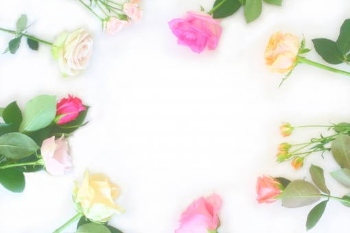 薔薇 ばら バラ 花びら 光 パステルカラー キラキラ おめでとう 淡い バックグラウンド フラワー happy birthday 背景デザイン ナチュラル 幸せ 春 花束 プレゼント フラワーアレンジ 入学 贈り物 ギフト お祝い 結婚 母の日 誕生日 記念日 ウェディング カード メッセージ バースディカード 壁紙 花 植物 初夏 5月 メッセージカード 可愛い かわいい 優しい ソフト やわらかい 背景 背景素材 素材 ピンク オレンジ 赤 黄色 緑 rose rosa ローズ グリーン 葉 テクスチャー 明るい フレーム 枠 コピースペース 白背景 白バック