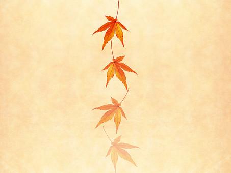モミジ もみじ 紅葉 椛 かえで カエデ 楓 葉 植物 自然 秋 余白 背景 背景素材 バックグラウンド テキストスペース コピースペース 暖色 空間 質感 テクスチャ 赤色 赤 季節 並べる 整列 透ける 透かし 半透明 ベージュ