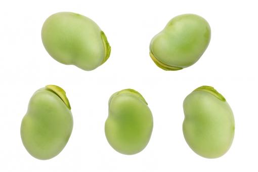 そら豆」に関する写真|写真素材...