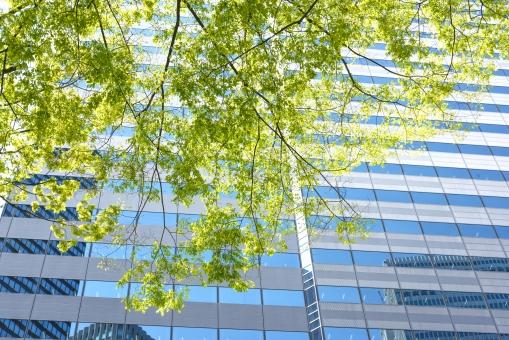 新緑 樹木 木 葉 若葉 グリーン 緑 青 ビル ビル街 オフィス街 オフィスビル 高層ビル 東京 新宿 日本 商業 ビジネス街 植物