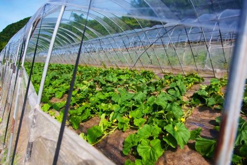 ビニールハウス ビニール 植物 食物 育てる 年中 温かい 暑い 保温 透明 農家 農業 北海道 空 大空 森 山 山中 草 自然 大自然 風景 景色 雄大 日本 土 大地 青空 雲 晴れ 青 ブルー グリーン 育つ 育成