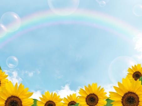ひまわりと虹の写真