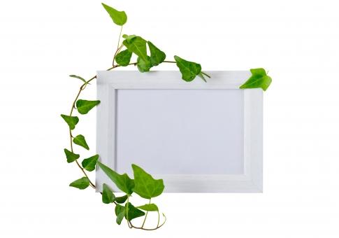 蔦 つた ツタ 緑 グリーン 植物 自然 ナチュラル 観葉植物 葉っぱ 木 フレーム 枠 木枠 小物 インテリア 背景 タイトルバック 爽やか 癒し テキストスペース キイロイトリ パス 白いフレーム フォトフレーム 額縁 白 ホワイト クリッピングパス キリヌキ 切り抜き きりぬき