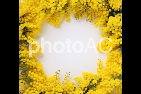 ふわふわミモザの花びら、フレーム素材の写真
