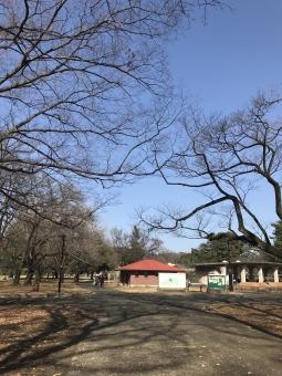 小金井公園の写真