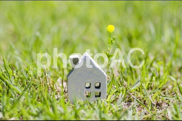 緑に囲まれた家の写真
