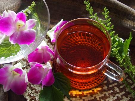 ルイボスティー ハーブティー 紅茶 お茶 ホットティー ホット 飲み物 美容 健康 アジアン 蘭 花 ハーブ シソ アフター クールダウン エステ くつろぎ リラックス