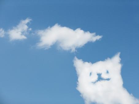 雲 空 青空 夏 快晴 晴れ 春 天気 子猫 猫 ネコ ぬこ ヌコ ブーム ペット 家族 笑顔 ニコニコ 爽やか 幸せ エコ 動物 バック 素材 ブルー テクスチャ 白 爽快 壁紙 かわいい