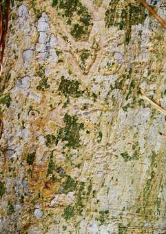 自然 植物 木 樹木 幹 木の皮 苔 緑 傷 ヒビ 根 這う 絡まる くっつく 成長 育つ 伸びる 枯れる 生える 模様 無人 室外 屋外 アップ 風景 景色