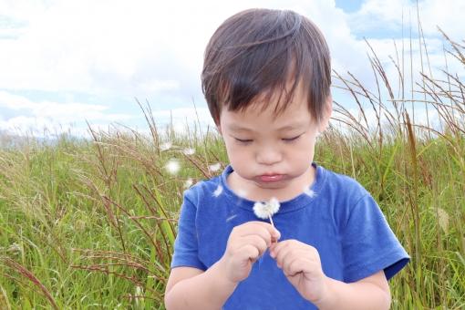 たんぽぽの綿毛を飛ばす男の子の写真