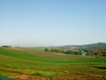 地面 畑 田畑 空 青空 丘 地平線 緑 青 綺麗 きれい キレイ 遠足 旅行 デート 北海道 ドライブ 収穫 景色 絶景 晴天 自然 気持ち良い 楽しい 幸せ