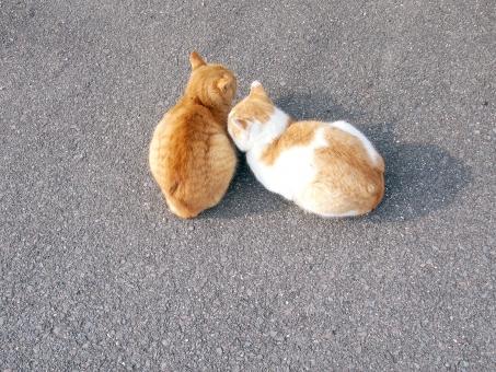 猫 ねこ ネコ 2匹 cat cats 路上 道路 アスファルト 仲良し 親子 カップル ぴったり くっつく 寄り添う 猫島 島 男木島 かわいい 可愛い キュート ラブラブ HAPPY ハッピー