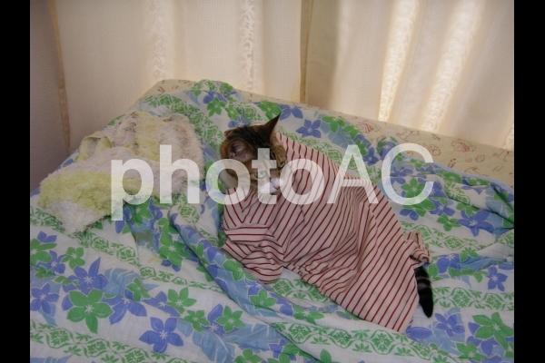 パジャマを羽織った猫の写真