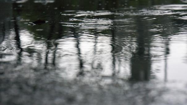 「雨 きれい 画像」の画像検索結果