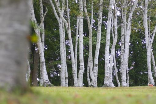 高原 岡山 真庭市 草原 ピクニック 自然 蒜山