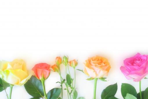 薔薇 ばら バラ 花束 花びら 光 パステルカラー キラキラ おめでとう 淡い バックグラウンド フラワー happy birthday 背景デザイン ナチュラル 幸せ プレゼント フラワーアレンジ 入学 贈り物 ギフト お祝い 結婚 母の日 誕生日 記念日 ウェディング カード メッセージ バースディカード 壁紙 花 植物 春 初夏 夏 秋 5月 メッセージカード 可愛い かわいい 優しい ソフト やわらかい 背景 背景素材 素材 ピンク オレンジ 赤 黄色 緑 rose rosa ローズ グリーン 葉 テクスチャー 明るい フレーム 枠 コピー コピースペース 白背景 白バック