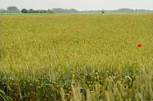 草原 平原 野原 大草原 草花 花 雑草 植物 自然 大自然 赤い花 涼しい 自然風 草色 草野 原っぱ 涼しい 風景 生い茂る 茂み 晴れ 晴れ晴れ 暑い 懐かしい