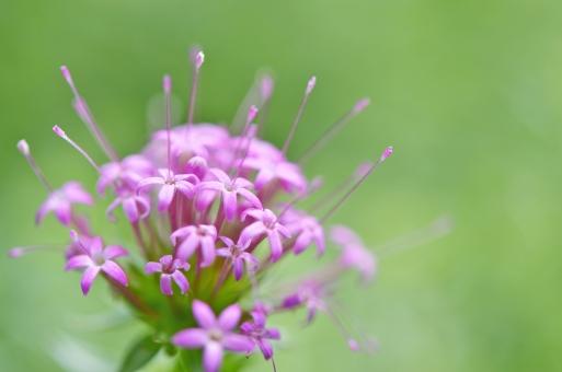 ピンクの花 小さい花 春 庭 装飾 ピンク 花弁 夏 葉 マクロ 新鮮 色 フリー写真 無料の写真 植物