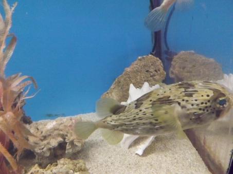さかな 魚 フィッシュ すいぞくかん 水族館 観賞用 かんしょうよう 綺麗 きれい 癒される いやされる fish aquarium