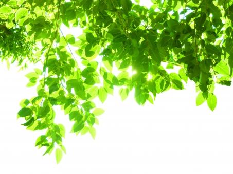 新緑木漏れ日イメージの背景の写真