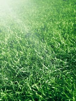 芝 日差し 光 芝生 草 緑 フィールド グリーン グラウンド 地面 野球 サッカー 球場 サッカー場 スポーツ 縦 ガーデニング 庭 植物 自然 環境 エコ テクスチャ 日光 明るい 春 夏 天然芝 背景 バックグラウンド