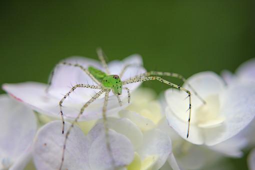 スパイダー くも 蜘蛛 クモ スパイダー 毒蜘蛛 毒グモ 昆虫 クモの巣 蜘蛛の巣 くものす 自然 アップ 野生 森 ムシ 虫 生き物 コレクション ペットショップ 1匹  植物 葉  花 緑 小さい