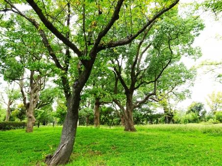 森林浴 夏 なつ ナツ しんりんよく 木 木々 たくさん 緑 グリーン 葉 葉っぱ 芝 芝生 公園 寝る 気持ちい 空気 最高 木洩れ日 木漏れ日 虫 鳥 草 動物 におい 匂い 良い 妖精 座る