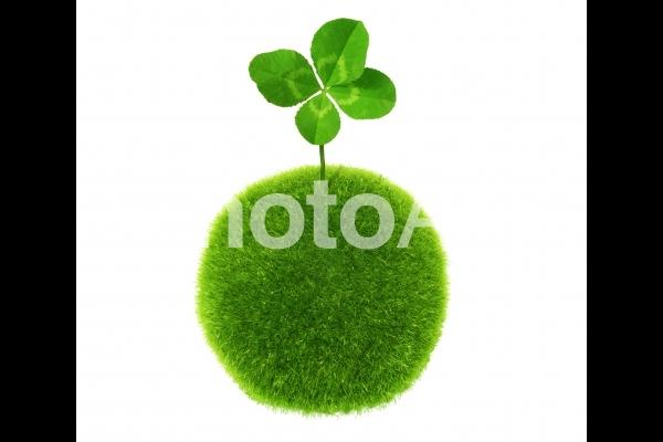 苔玉から生えた四葉のクローバーイメージ-白背景の写真