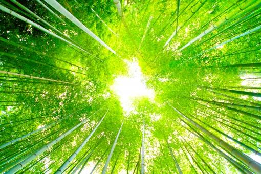 日本庭園 日本文化 sun 太陽 美しい 竹林 竹 明月院 鎌倉 bamboo 植物 風景 日本 神奈川県 神奈川 自然 緑色 和 花 北鎌倉 笹 梅雨 緑 寺 青空