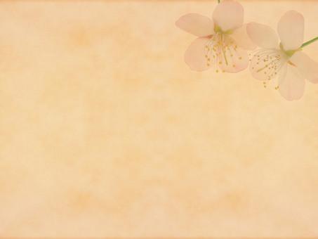 花 桜 サクラ さくら 花びら 植物 自然 春 空間 余白 テクスチャ 質感 背景 背景素材 バックグラウンド テキストスペース コピースペース 枠 フレーム 暖かい ナチュラル 花柄 花模様 桜の花 桜柄 ベージュ 和 2輪 2つ