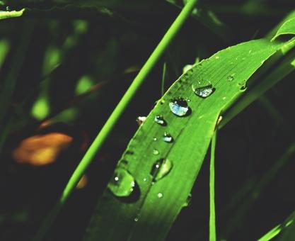 東南アジア 露ののった葉の写真