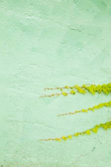 壁 カベ かべ 緑 グリーン 葉 植物 素材 テクスチャ 背景 背景素材 バックグラウンド バック 縦