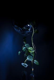 Umer アップ クローズアップ 植物 葉 葉っぱ 茎 緑 のびる 蔓 つる ツル 成長 暗い 室内 伸びる ライト スポットライト 青バック 紺色 背景 豆電球 電球 コード 明かり