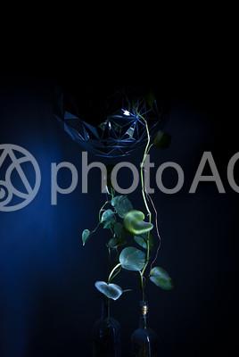 まっすぐ伸びた植物の写真