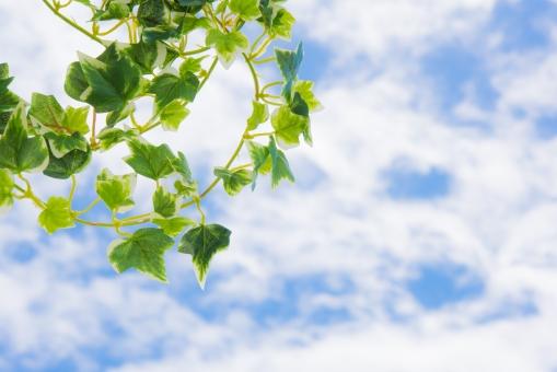 グリーン 青葉 若葉 青空 空 雲 太陽 爽やか さわやか コピースペース 春 リラクゼーション リラックス 緑 青 ブルー 水色 夏 秋空 葉 風景 初夏 光 明るい イメージ 健康 清々しい みどり 背景 壁紙 背景素材 自然 テキストスペース 植物 樹木 木 素材 バック バックグラウンド 背景写真 葉っぱ 景色 新緑 クリーン
