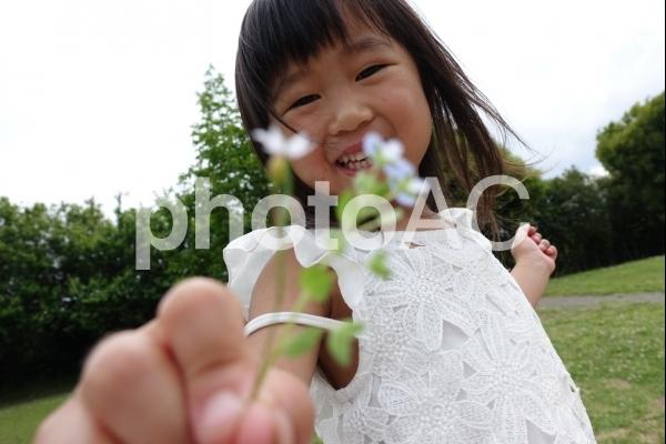 花摘する子供 女の子の写真