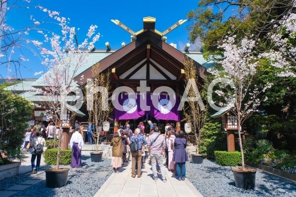 春の東京大神宮の写真