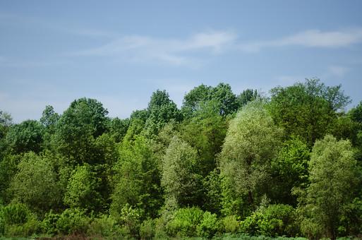 木 木々 林 山林 密林 夏山 山 密林 緑 緑色 自然 大自然 植物 田舎 涼しい 森林 めぐみ  高い ふさふさ がさがさ 青空 絵画 風景 濃い緑 深い緑 里山 野山
