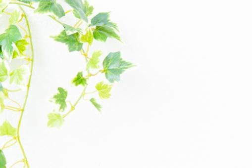 自然 植物 樹木 葉っぱ 木の葉 新緑 緑 グリーン 初夏 夏 爽やか 木漏れ日 光 透過光 マイナスイオン 清潔感 澄んだ空気 若葉 眩しい テクスチャー 5月 壁 壁紙 カフェ テクスチャ インテリア ナチュラル アンティーク 板 おしゃれ 雑貨 ベージュ ウォール リメイク リノベーション 温もり 白壁 白 コピースペース イメージ クリーン 家 ホーム