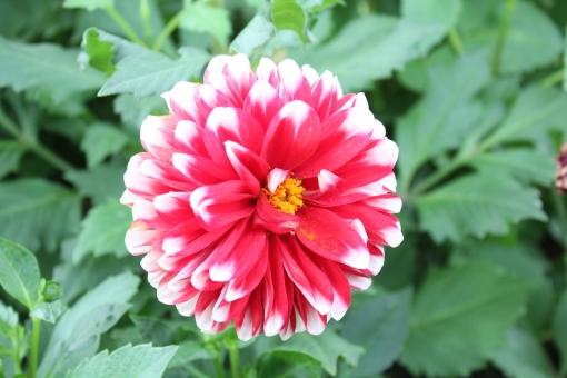 7月の花に関する写真写真素材なら写真ac無料フリー