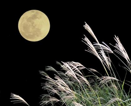 満月とすすき の写真
