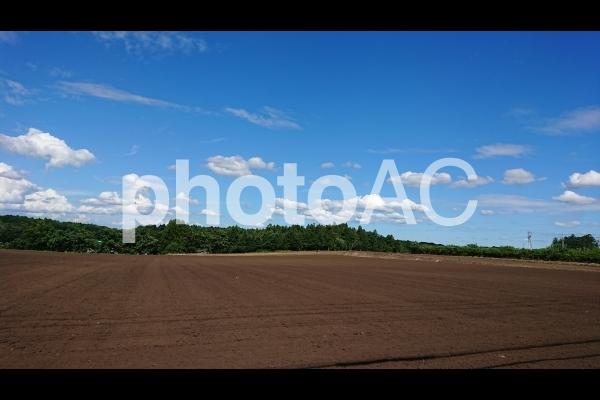 畑 青空の写真