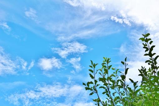 青空 空 青い空 雲 白い雲 若葉 葉 葉っぱ 若葉色 雑草 草 青色 青い ブルー 緑 緑色 グリーン 植物 自然 風景 景色 景観 背景 テクスチャ 壁紙 爽やか 清々しい 晴れ 快晴 晴天 澄み渡る 澄み切った 穏やか 晴れ晴れ 爽快 壮大